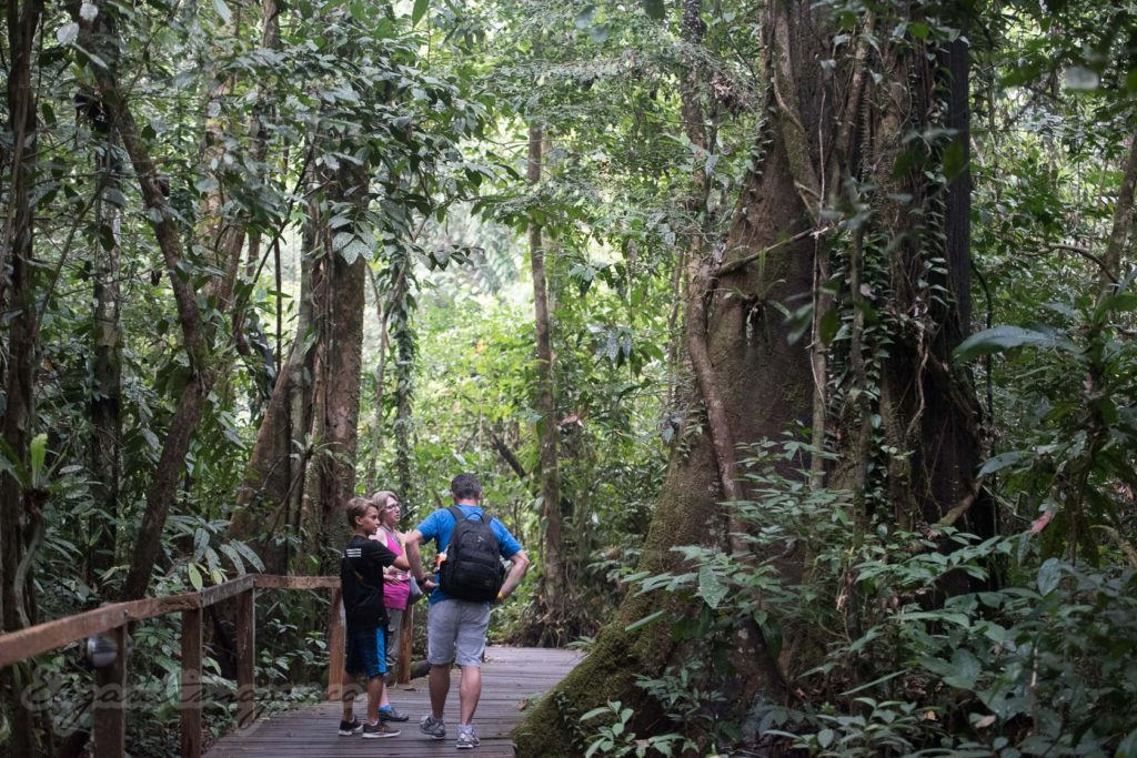 Gunung Mulu National Park-Plank boardwalk