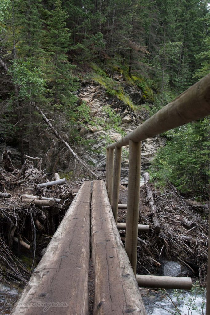 Heart Creek Canyon trail log bridge