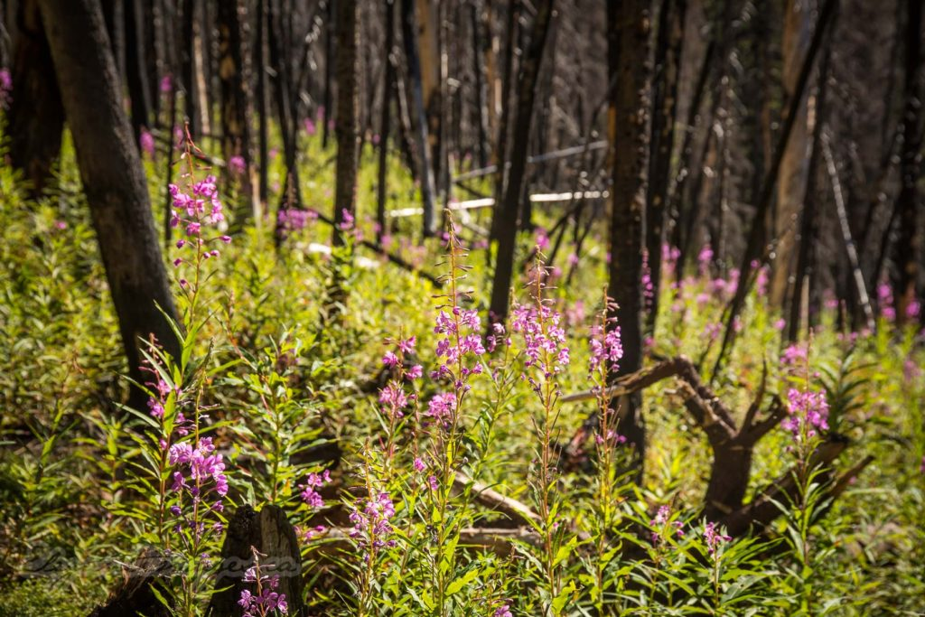 North Buller Pass-Burned area