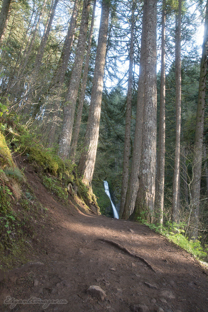Trail to ponytail falls