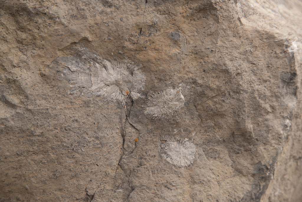 Boulder with fossils